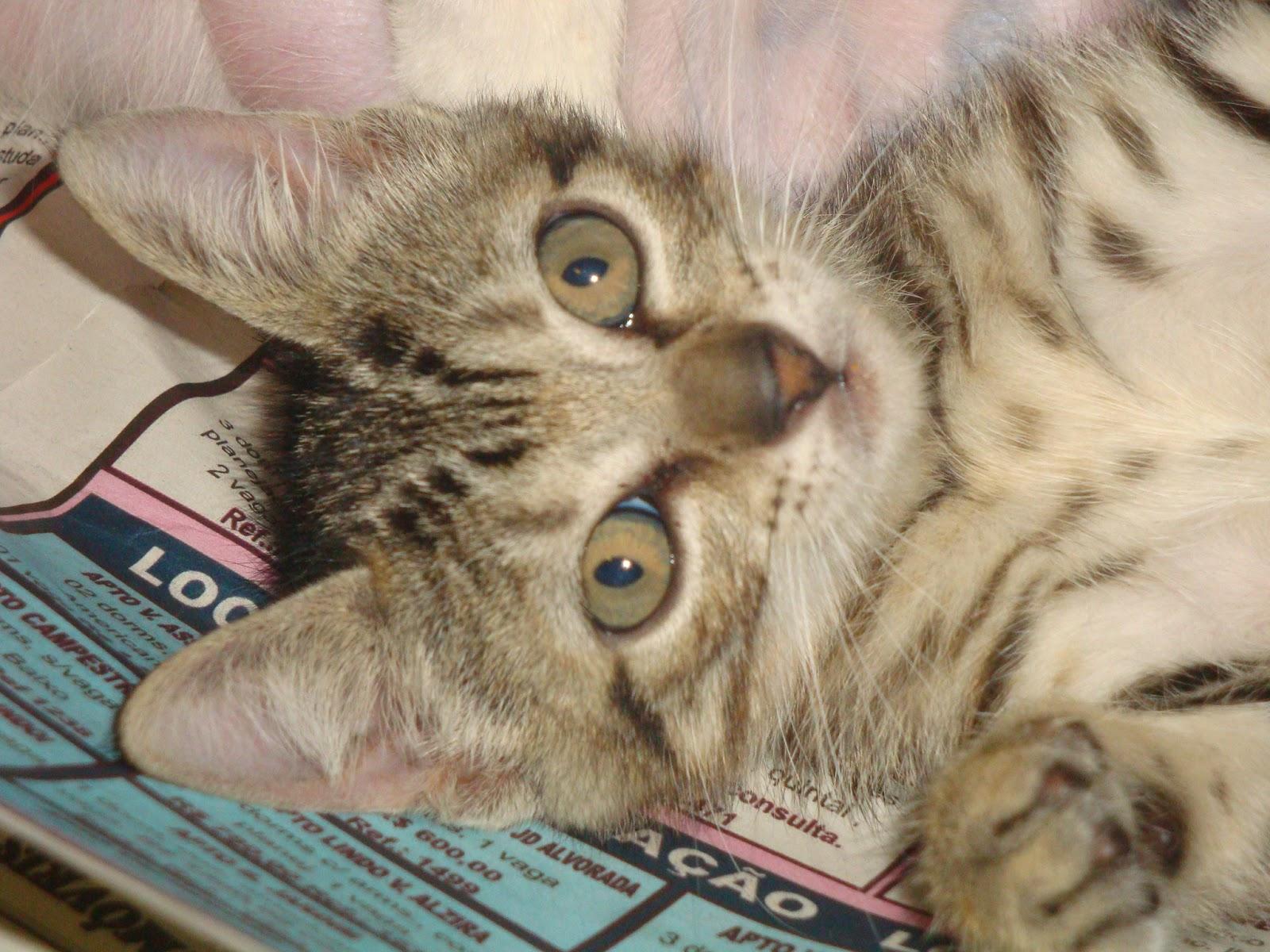 Infecção urinária em gatos - Confira os sintomas no Bichano... (3/3)