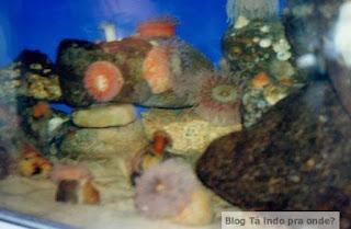 aquário em Ebsjerg