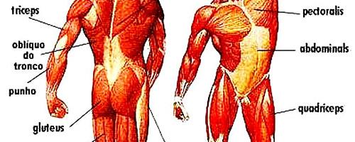 10 funções corporais que continuam mesmo depois da morte - Movimentos musculares