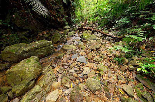 rocks,ferns,jungle vegetation