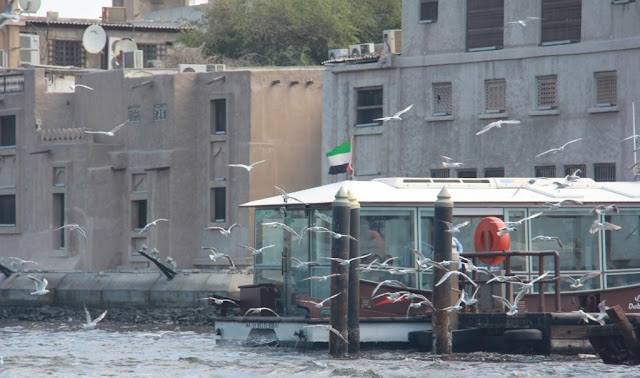 Migratory birds fly passed an RTA waterbus berth in the Dubai Creek