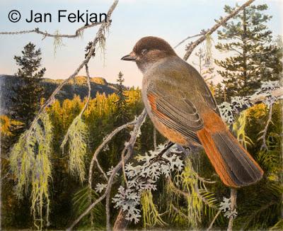 Bilde av digigrafiet 'Lavskrike'. Digitalt trykk laget på bakgrunn av et maleri av en fugl. Illustrasjon av lavskrike, Perisoreus infaustus. Bilde av fugl som sitter på en gren i skogsmiljø med utsikt over skoglandskap. Bildet er i breddeformat.