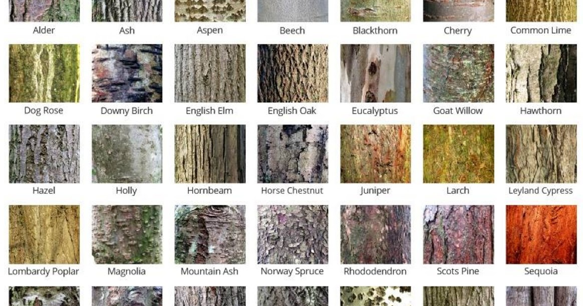 Roby Milling: Absolutely Barking! Different Types Of Tree Bark