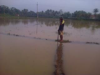 Ribuan Hektare Sawah di Karawang Terendam Banjir