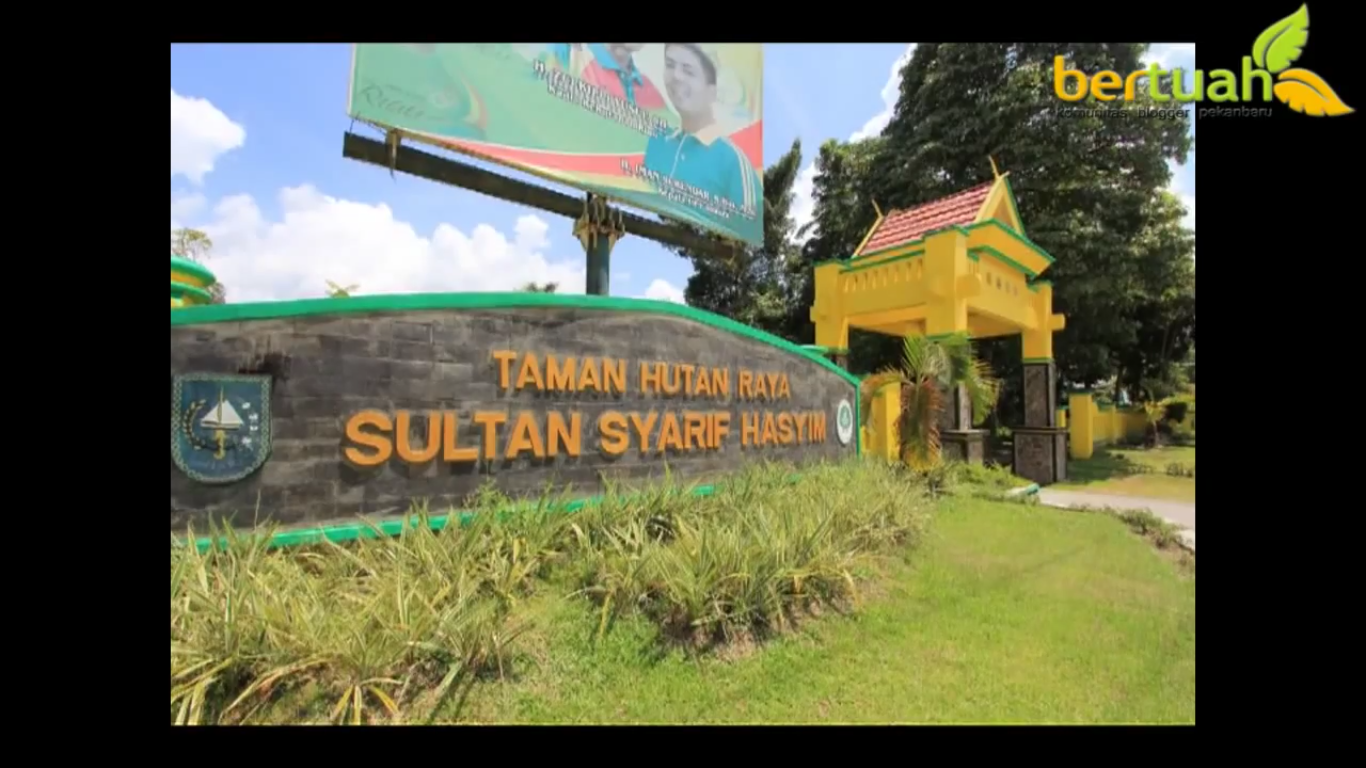 Wisata Taman Hutan Raya Sultan Syarif Hasyim Riau Riaumagz