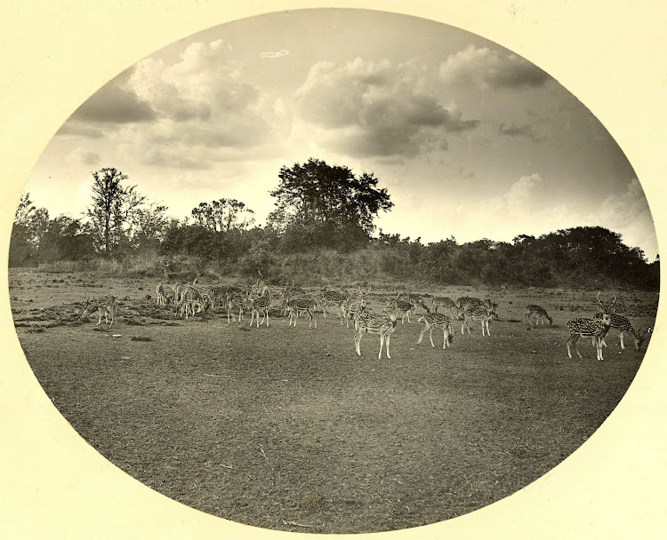 Nawab's Deer Park in Dhaka (Currently in Bangladesh) - 1904