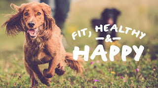 How to Keep a Dog in Good Health And Happy