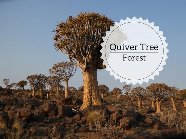 Quiver Tree Forest a Keetmanshoop