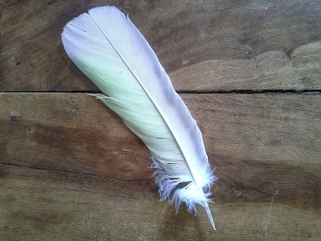 A feather for the garden