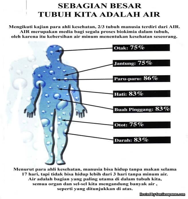 Manusia Akan Mati Jika Tubuh Kurang 10 Peratus Air Dalam Tubuh!