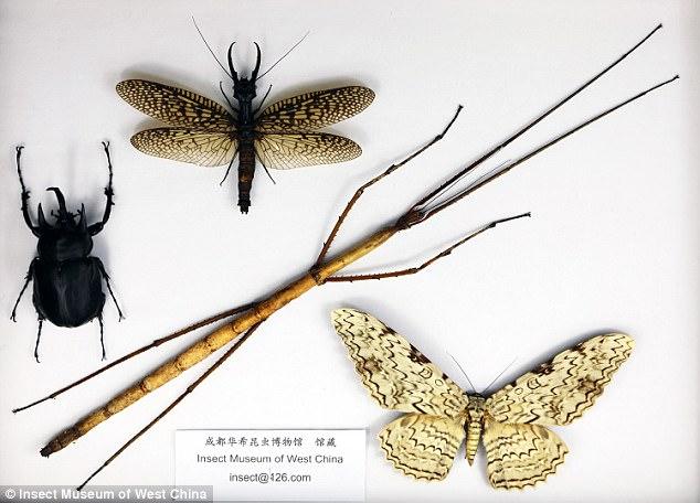 paraziták hmyzu