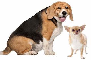 Obesità nel cane: gestione e prevenzione