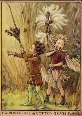 https://flowerfairies.com/rush-grass-cotton-grass-fairies/