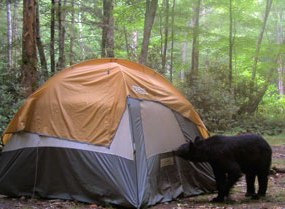 Gsmnp Hiker Forest Service Closes Shining Rock And