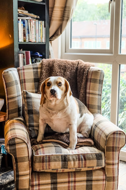 Holly Bobbins sits in the Neyladn Star Tartan Fabric Wingback Chair, Mandy Charlton, Photographer, writer, blogger, a place to hide from the world