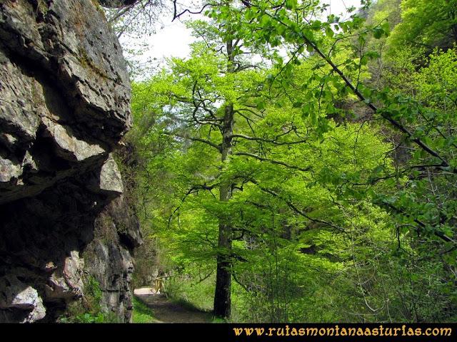 Ruta del Alba: Vegetación en la ruta