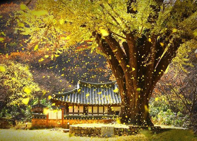 17 câu nói đáng giá ngàn vàng giúp bạn bình an, tự tại, mỗi lời đều thấm thía tâm can
