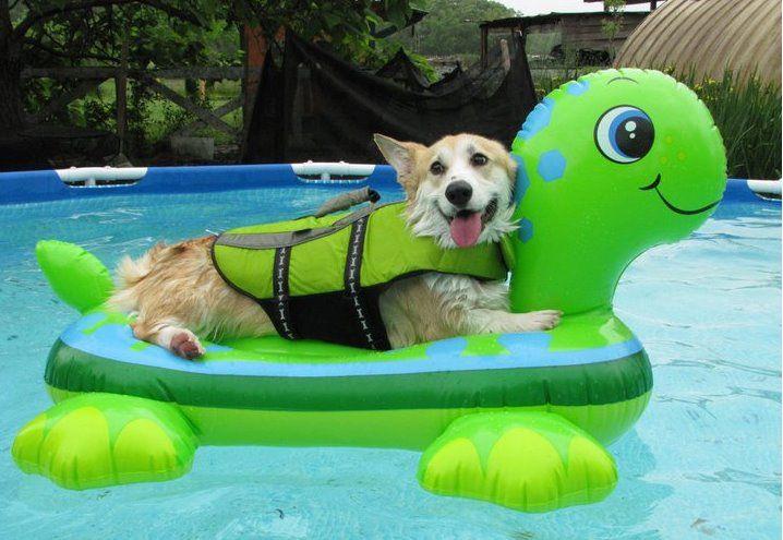 IMAGE(http://4.bp.blogspot.com/-j_jKIMoo_OM/Uh9pVUp_beI/AAAAAAAABl0/or1jQBk9Xdw/s1600/corgi-swimming-pool-raft.jpg)