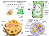 Organel organel sel