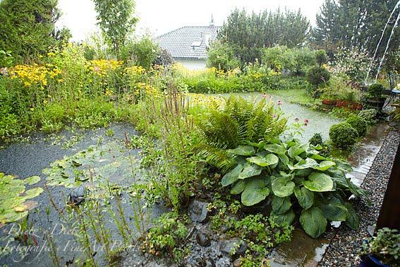 Bei Starkregen wird auch der Rasen temporär zum Teich