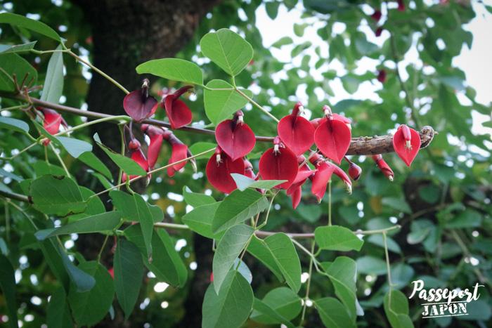 Feuillages et fleurs d'automne à Glover Garden (détail), Nagasaki, Kyushu