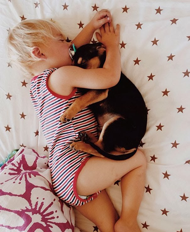 dog and toddler napping together 5