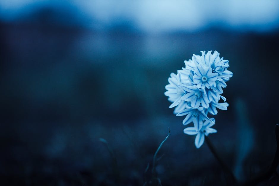 blue flower - Enjoy The Little Things