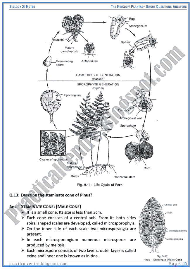 Kingdom Plantae - Short Questions Answers - Biology XI