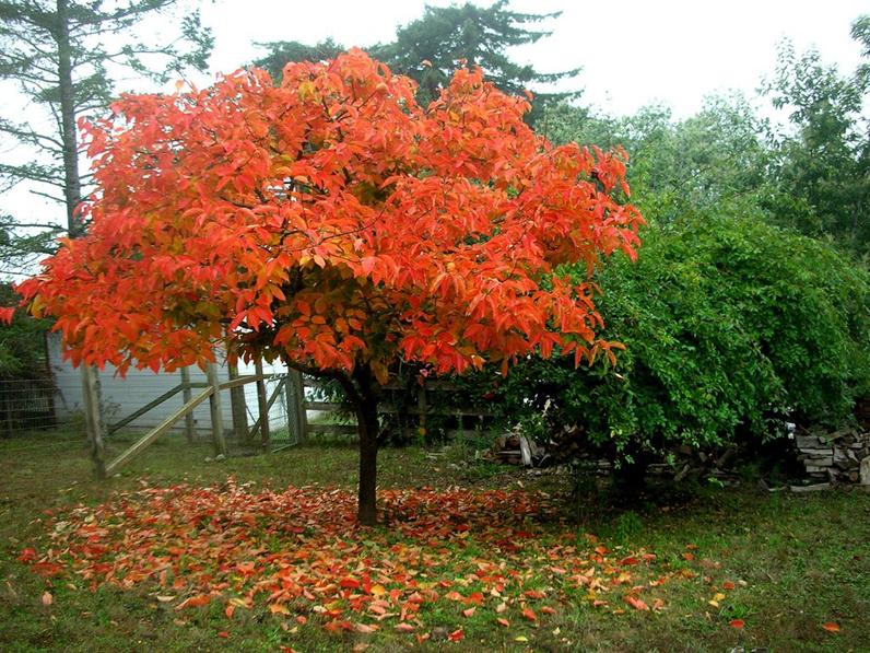 Scegliere Gli Alberi Da Giardino : Gli alberi da giardino quali scegliere edilizia in un