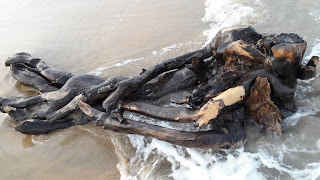 Piece of dead wood at sea shore