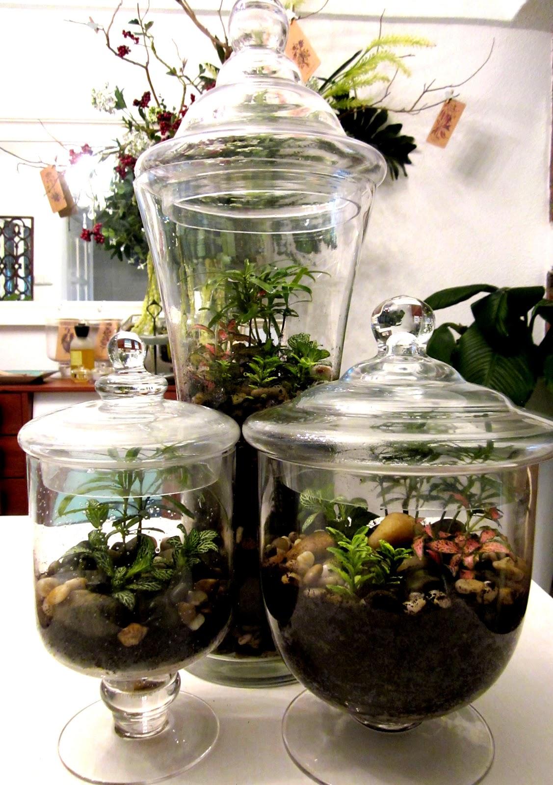 Zen Garden Plants