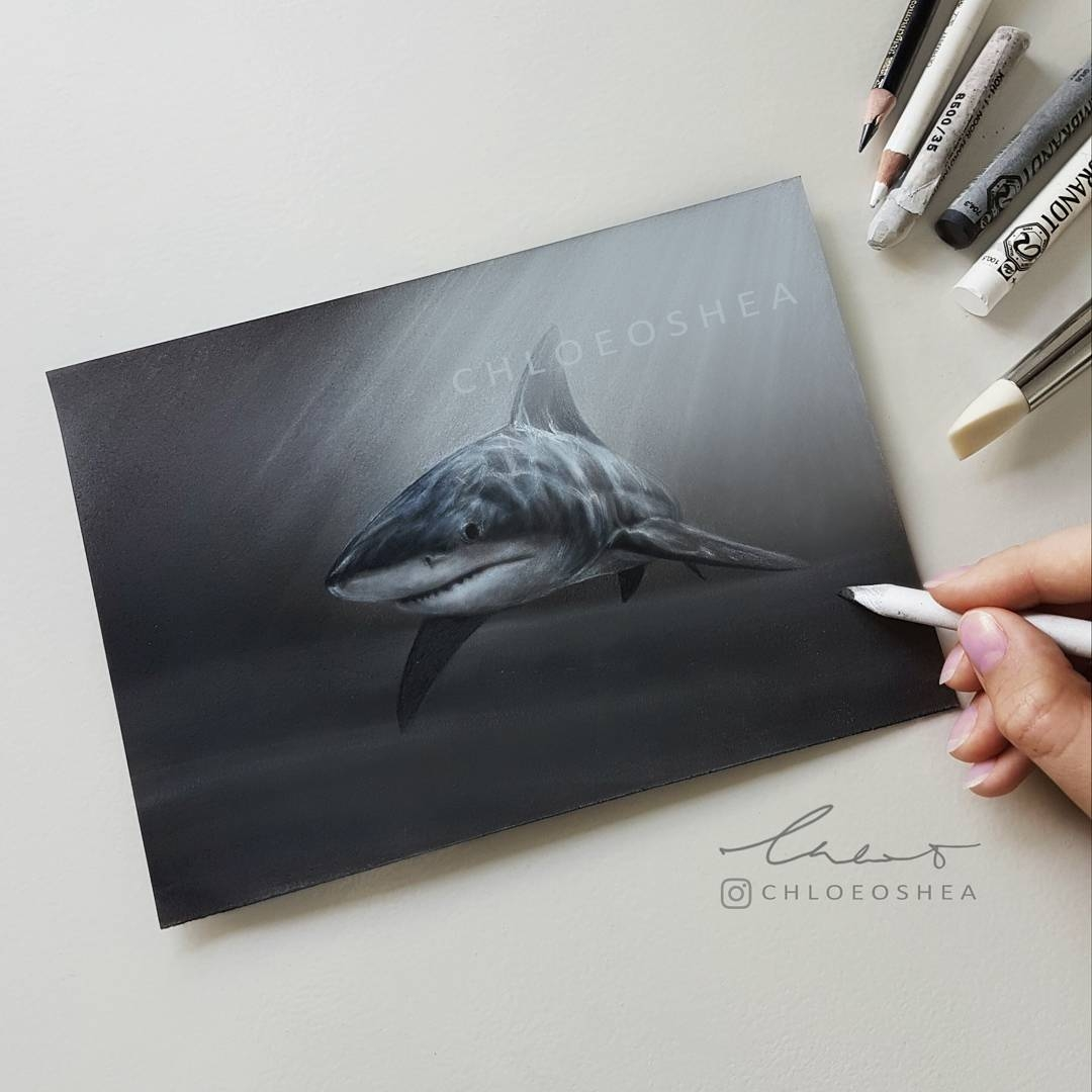 11-Shark-Chloe-O-Shea-Realistic-Wind-Animal-Drawings-www-designstack-co