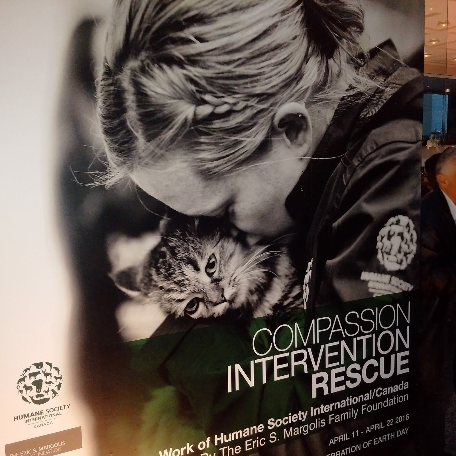 Heartwarming image of a rescued kitty, with rescuer, at the lobby art exhibit.