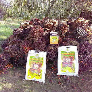 pupuk pembesar buah sawit