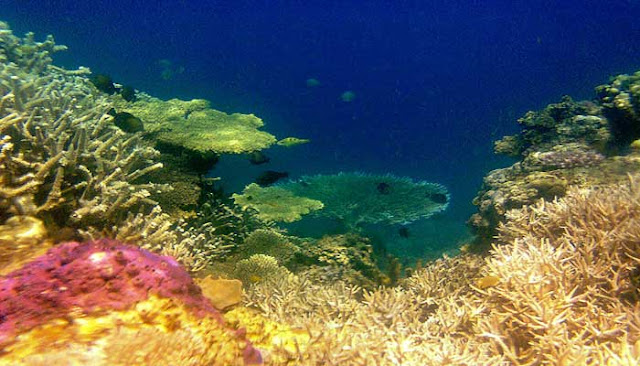Menikmati Pesona Teluk Saleh Di Sumbawa