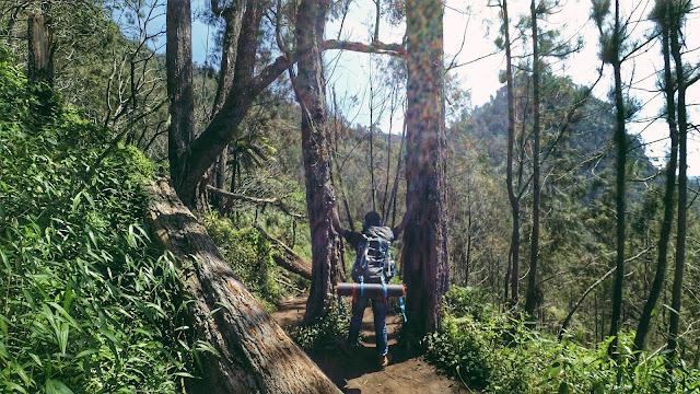 Hutan di jalur pendakian Gunung Semeru