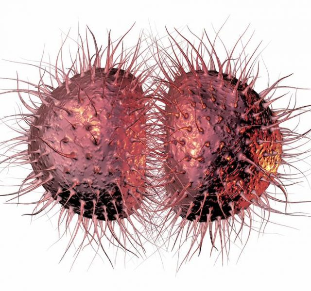 FACTS YOU DON'TKNOW ABOUT GONORRHEA - Gregory's health world  FACTS YOU DON&#...