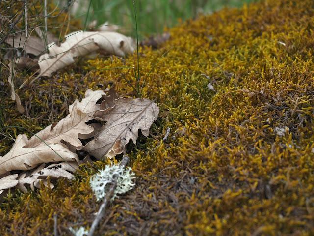 Detalle de hojas secas sobre musgo