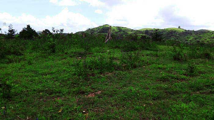vagamon real estate brokers agents buy land agricultural
