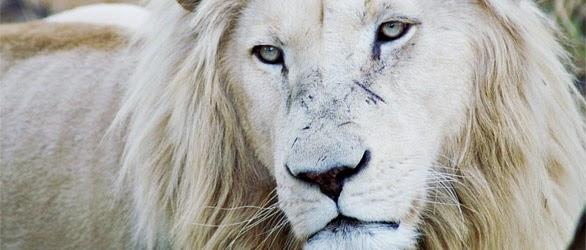leul datează sirop pierdere în greutate)