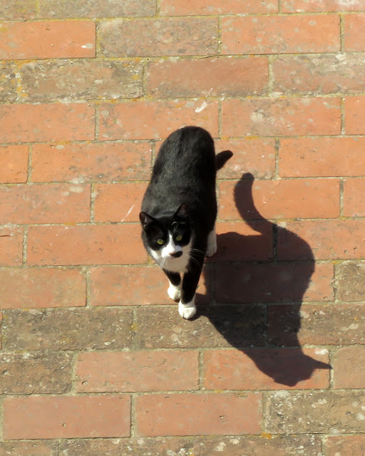 Cat seen from above, Fortezza Vecchia (Old Fortress), Livorno
