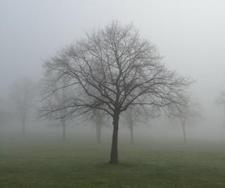 poesias sobre a cegueira, poesias sobre a incompreensão do mundo