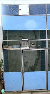 Burung Cendet - Model Kandang yang Disarankan Untuk Penangkaran Burung Cendet - Penangkaran Burung Cendet