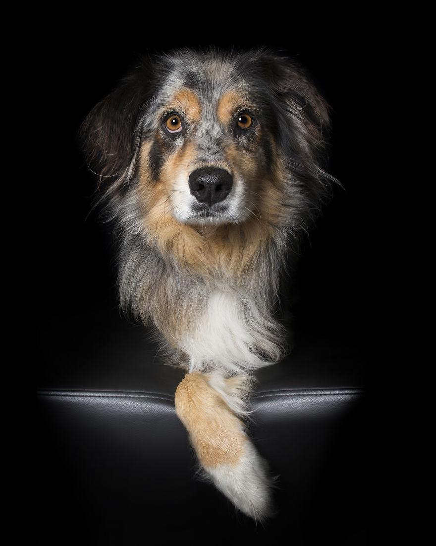 9eb982bcfc980 Retratos de Animais com deficiências realçam a beleza de suas imperfeições