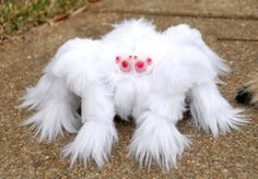 Tarantula | A-Z List of 125 Rare Albino Animals [Pics]