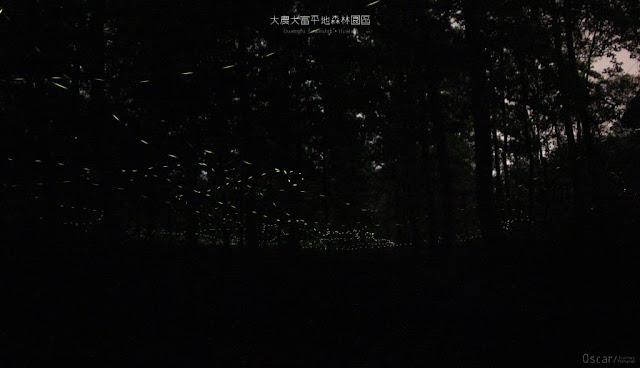 大農大富平地森林園區-12