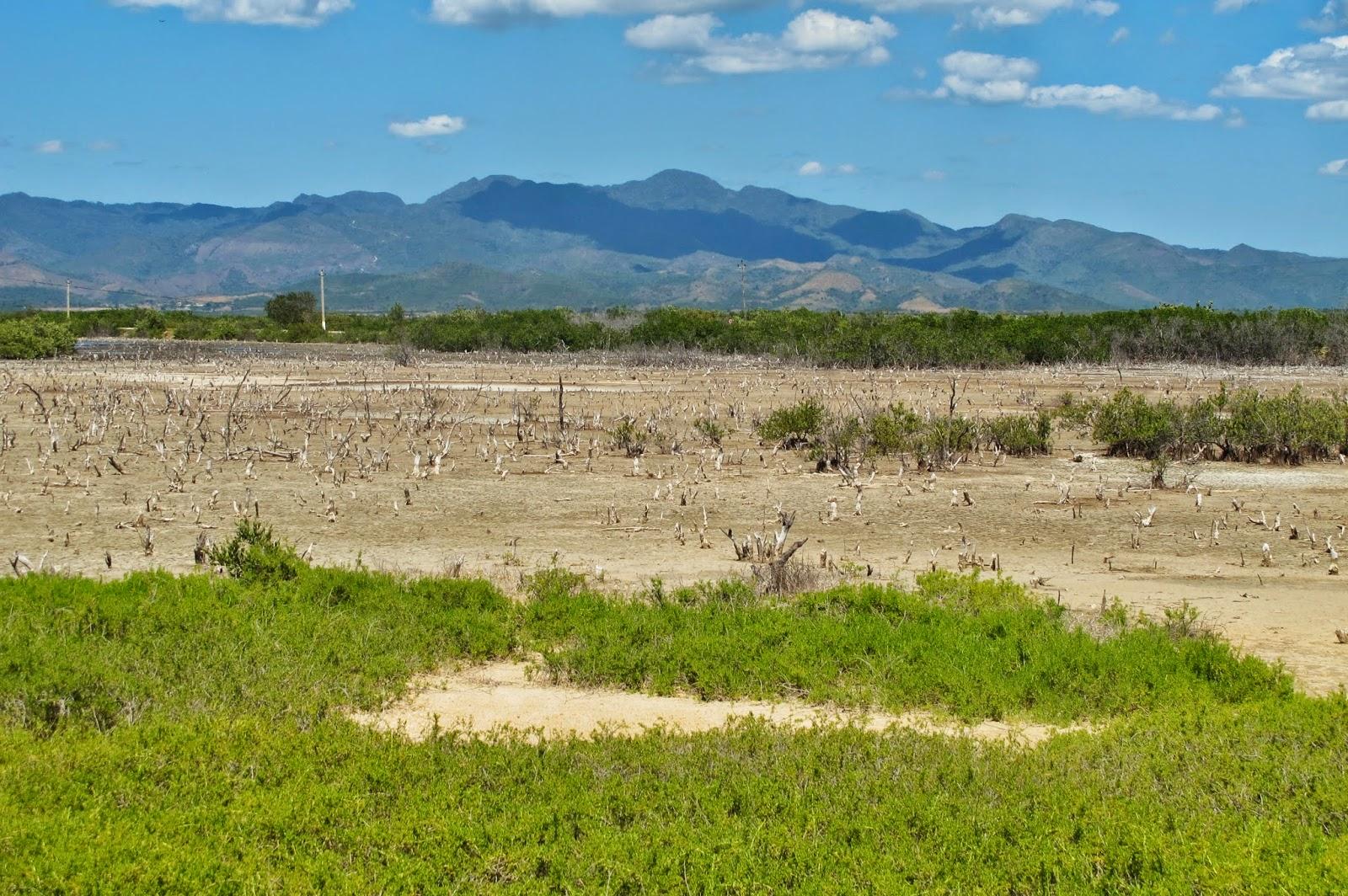 Mangue seco na Península Áncon, no Caribe de Cuba.