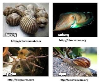 Pembagian Jenis Hewan Vertebrata Dan Avertebrata Mix Knowledges Blogs