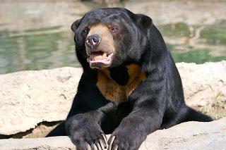 15 Fakta dan Informasi Menarik Tentang Beruang