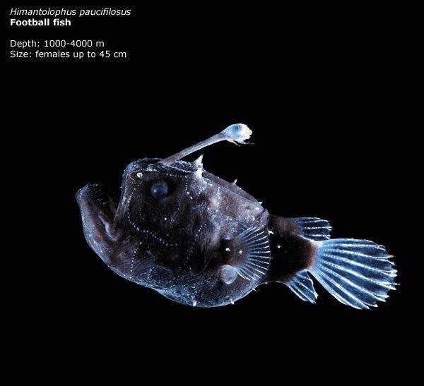 Beautiful Creatures In Mariana Trench, Deepest Place In